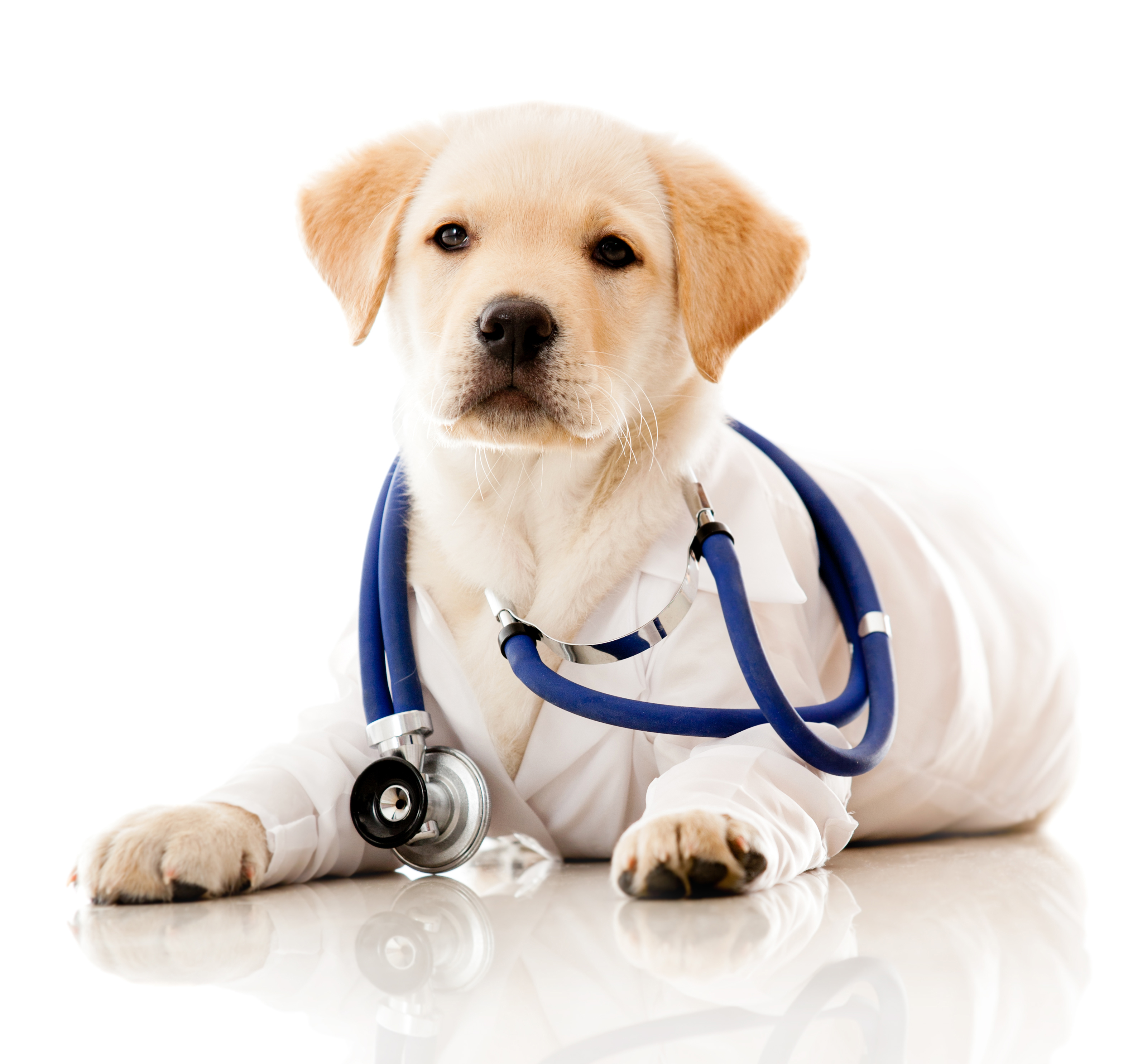 pets-and-health.jpg